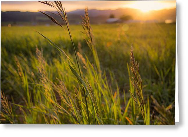 Meadow Light Greeting Card by Chad Dutson