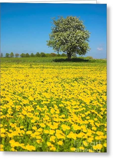 Ble Sky Greeting Cards - Meadow Greeting Card by Michal Bednarek