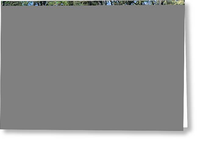 Panoramics Greeting Cards - Meadow Of Purple Flowers, California Greeting Card by Panoramic Images