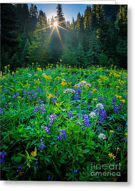 Hike Greeting Cards - Meadow Sunburst Greeting Card by Inge Johnsson