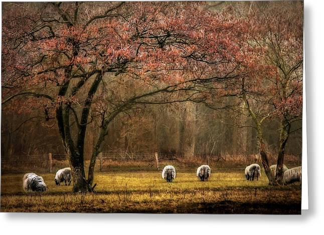 Dream Scape Greeting Cards - Meadow with sheep Greeting Card by Hugo Bussen