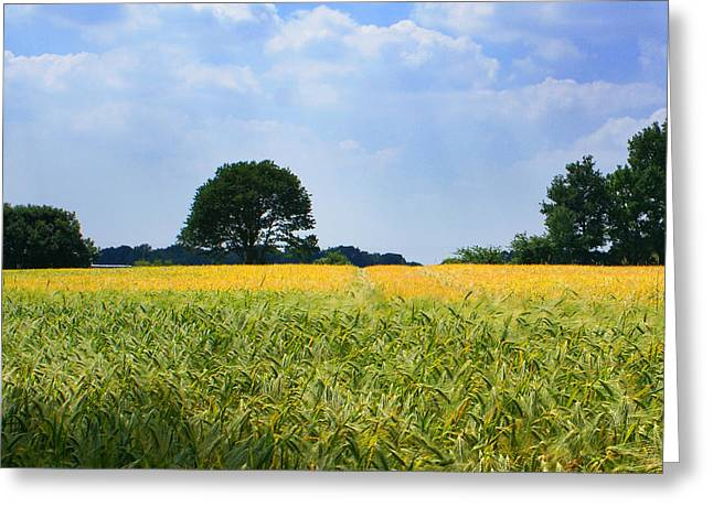 Golden Summer Grass Greeting Cards - Meadow with Trees Greeting Card by Dirk Dzimirsky
