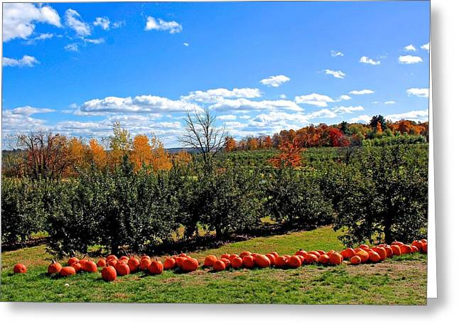 Hayride Greeting Cards - Meadowbrook Farm Orchard in Autumn Greeting Card by Michael Saunders