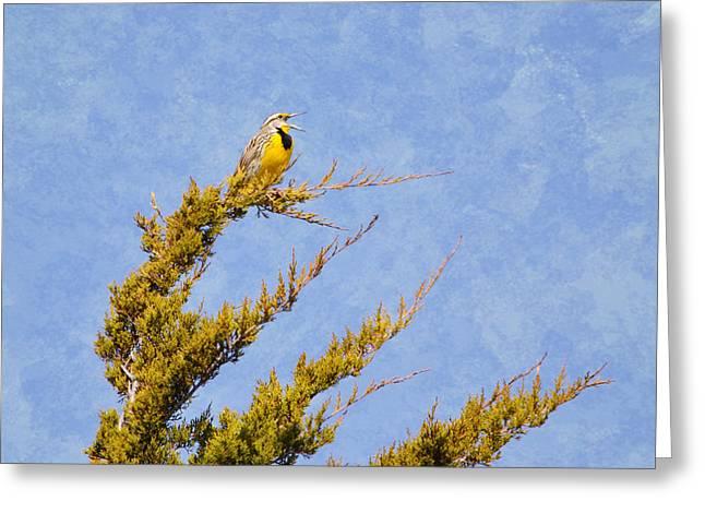 Black Top Greeting Cards - Meadowlark Serenade Greeting Card by Deena Stoddard
