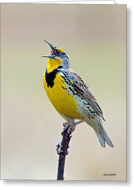 D700 Greeting Cards - Meadowlark Singing Greeting Card by Stephen  Johnson