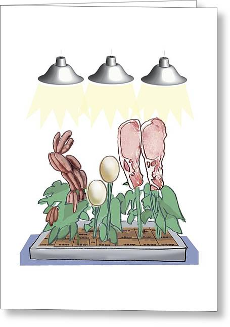 Red Meat Greeting Cards - Meat culture growth, conceptual artwork Greeting Card by Science Photo Library