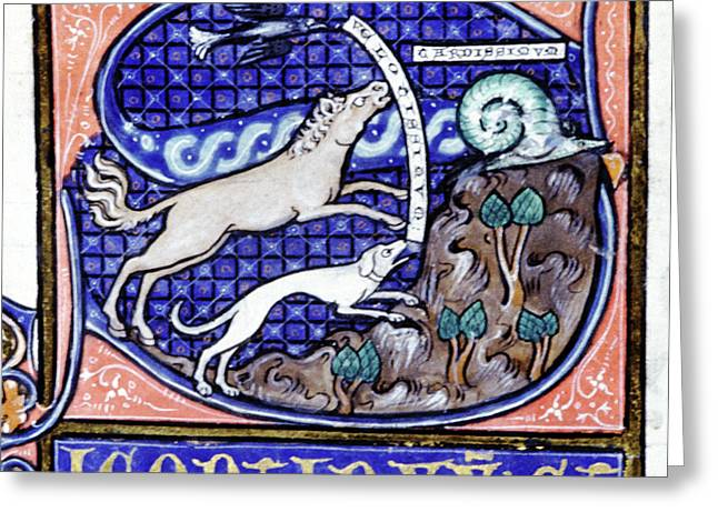 Mediaeval Zoological Manuscript Greeting Card by Cci Archives