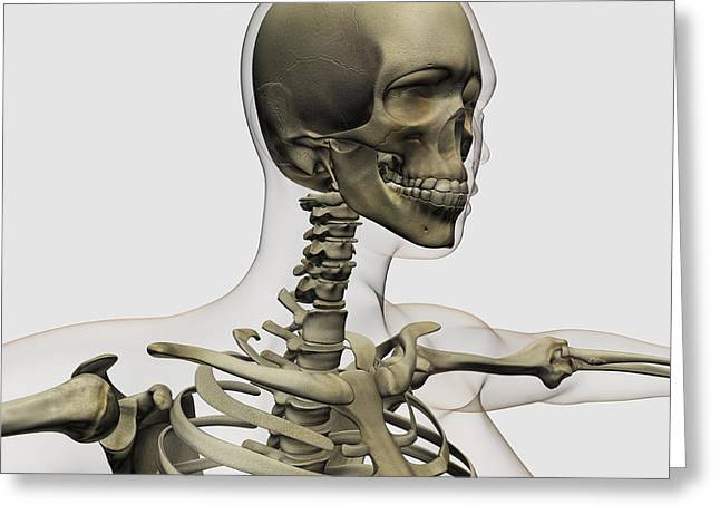 Medical Illustration Of A Womans Skull Greeting Card by Stocktrek Images