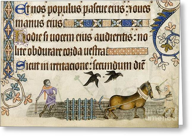 Harrow Greeting Cards - Medieval Agriculture, Luttrell Psalter Greeting Card by British Library