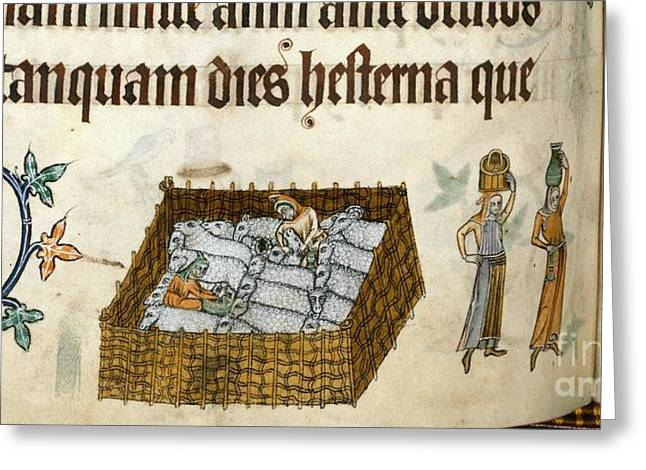 Texting Greeting Cards - Medieval Farming, Luttrell Psalter Greeting Card by British Library