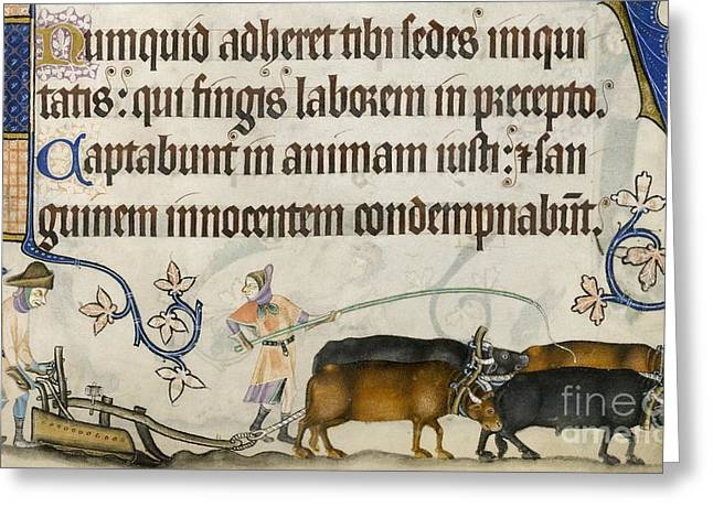 1300s Greeting Cards - Medieval Ploughing, Luttrell Psalter Greeting Card by British Library