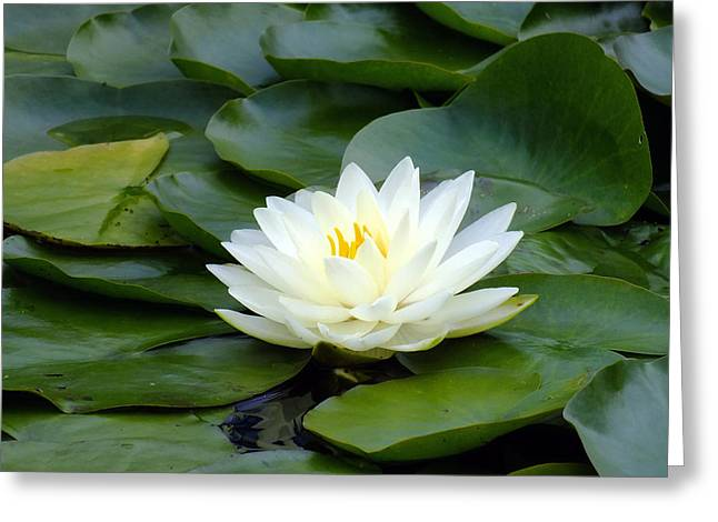 Glass Art Greeting Cards - Meditation Greeting Card by Bill Morgenstern