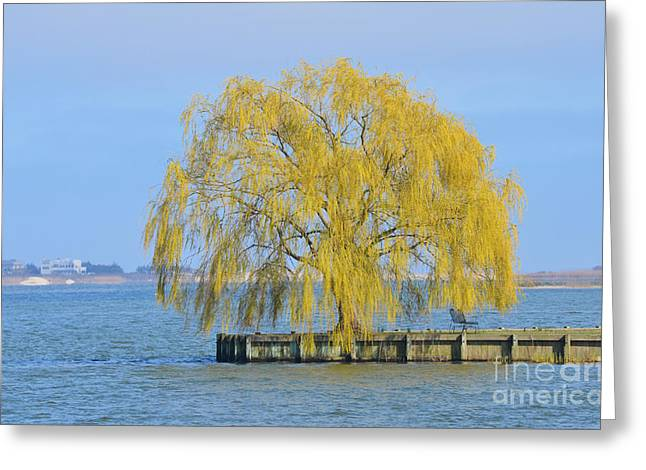 Weeping Greeting Cards - Yellow Meditation Tree On Lake Greeting Card by ArtyZen Studios - ArtyZen Home
