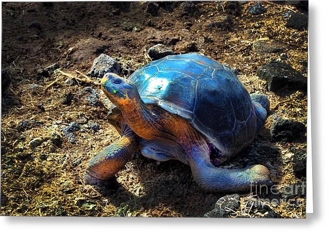Tortuga Greeting Cards - Medium Galapagos Giant Tortoise Greeting Card by Al Bourassa