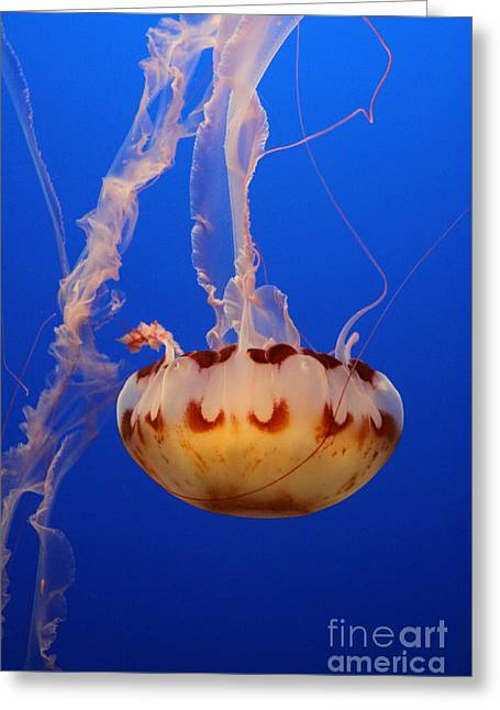 Jelly Fish Greeting Cards - Medusa Jellyfish  Greeting Card by Christiane Schulze Art And Photography