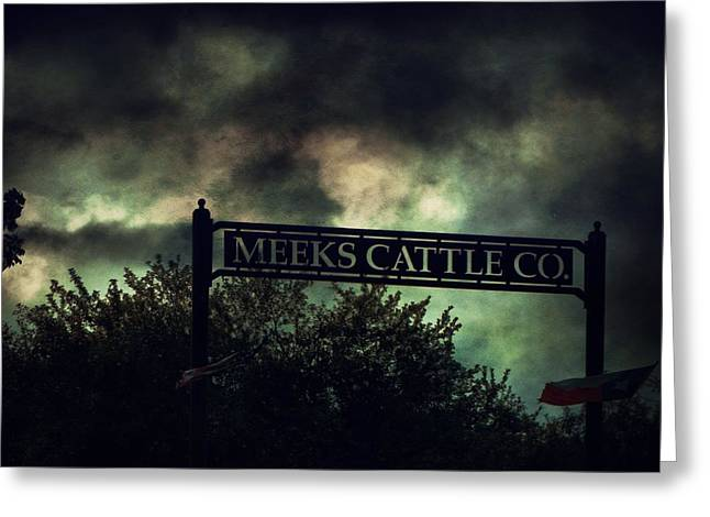 Meeker Greeting Cards - Meeks Cattle Greeting Card by Emily Stauring