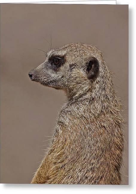 Meerkat Photographs Greeting Cards - Meerkat 11 Greeting Card by Ernie Echols