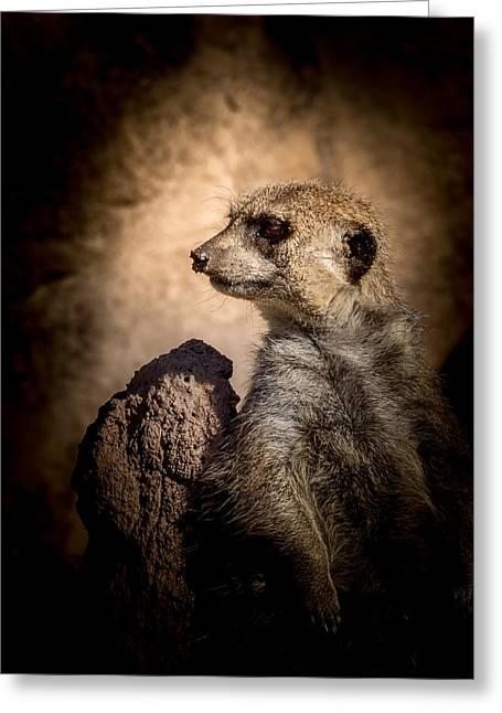 Meerkat Photographs Greeting Cards - Meerkat 12 Greeting Card by Ernie Echols