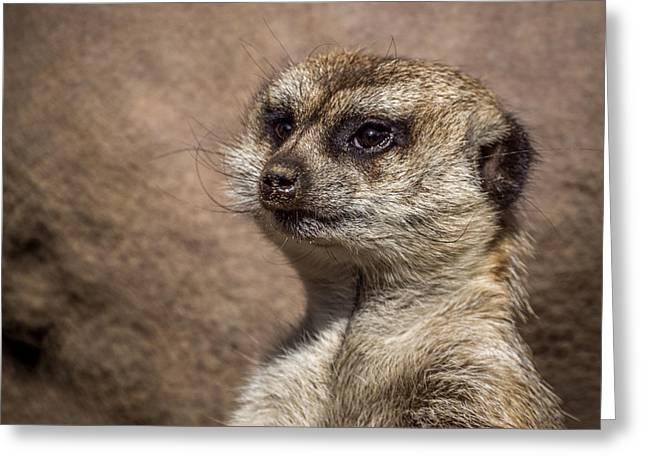 Meerkat Photographs Greeting Cards - Meerkat 13 Greeting Card by Ernie Echols