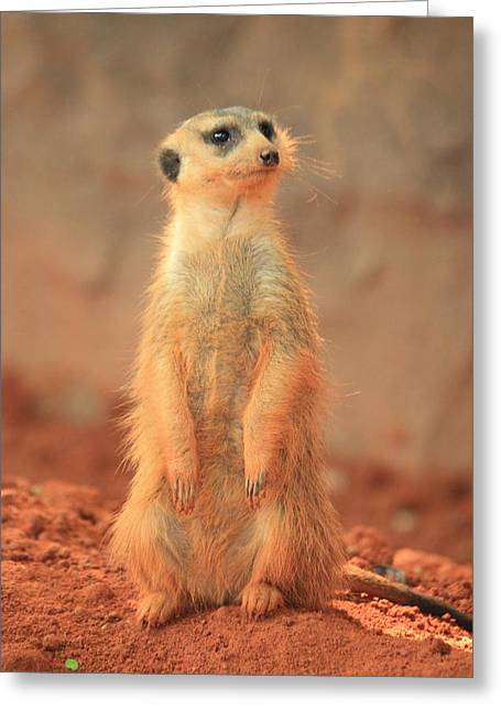 Red Clay Greeting Cards - Meerkat 2 Greeting Card by Mandy Shupp