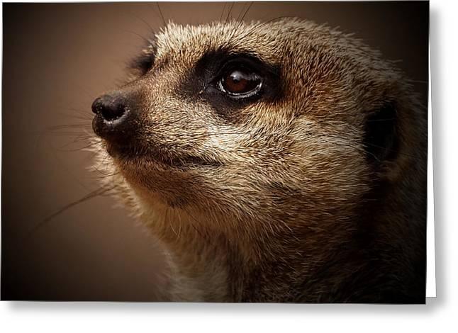 Meerkat Photographs Greeting Cards - Meerkat 6 Greeting Card by Ernie Echols