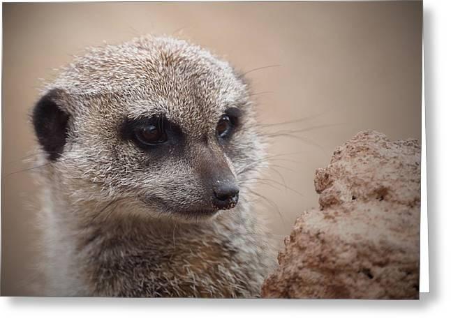 Meerkat Photographs Greeting Cards - Meerkat 7 Greeting Card by Ernie Echols