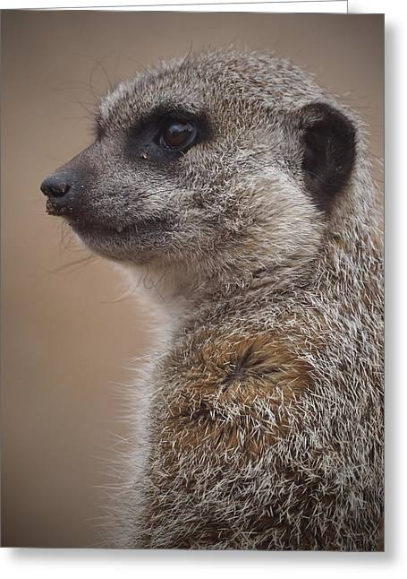 Meerkat Photographs Greeting Cards - Meerkat 9 Greeting Card by Ernie Echols