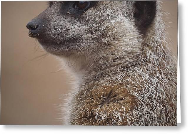 Meerkat 9 Greeting Card by Ernie Echols