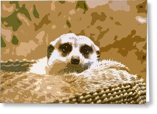 Meerkat Photographs Greeting Cards - Meerkat Greeting Card by Carol McCarty
