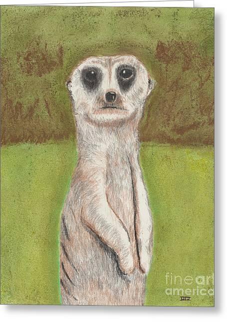Meerkat Drawings Greeting Cards - Meerkat Greeting Card by David Jackson