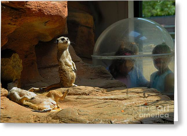 Sleeping Greeting Cards - Meerkat Manners Greeting Card by Amy Cicconi