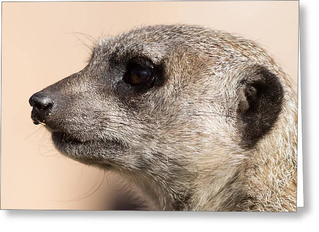 Meerkat Photographs Greeting Cards - Meerkat Mug Shot Greeting Card by Ernie Echols