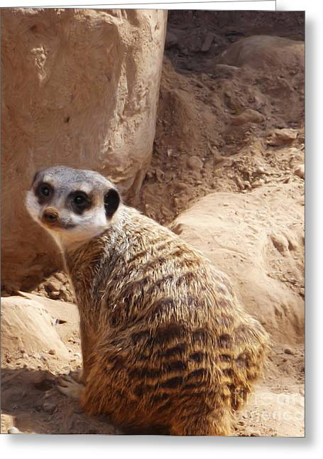 Meerkat Portrait Greeting Card by Methune Hively