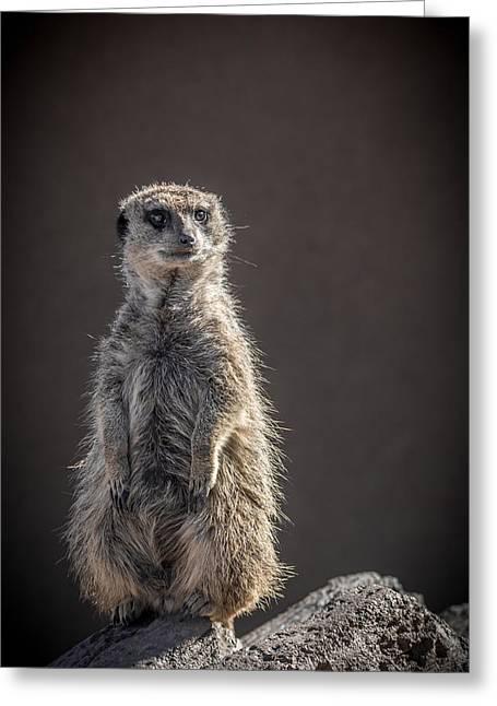 Meerkat Photographs Greeting Cards - Meerkat Sentinel Greeting Card by Ernie Echols