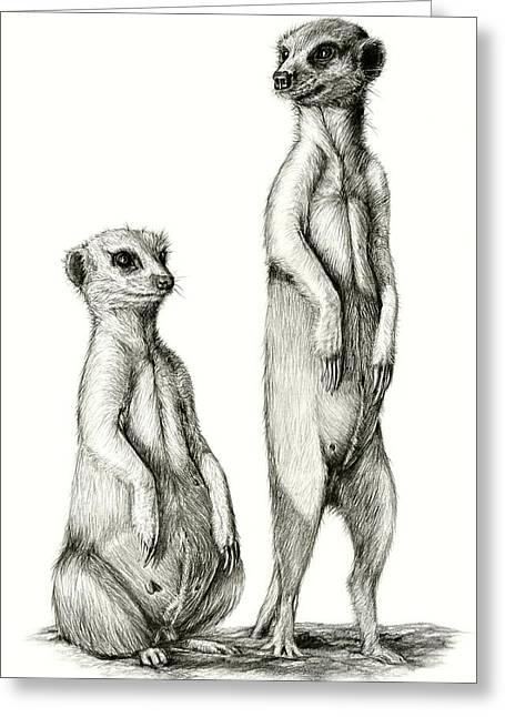 Meerkat Drawings Greeting Cards - Meerkatte Greeting Card by Heidi  Kriel