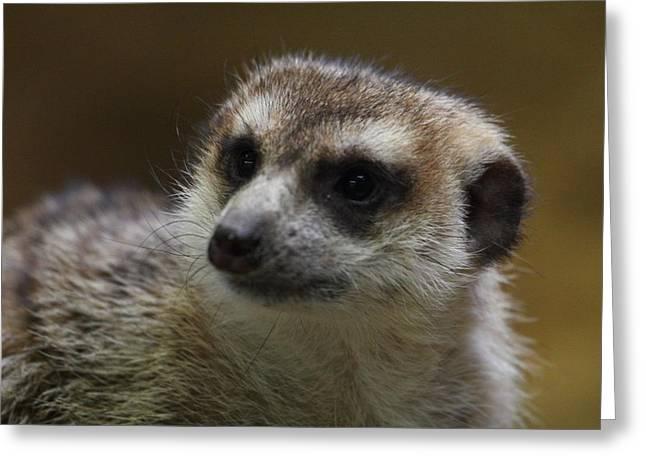 Meerkat Photographs Greeting Cards - Meerket - National Zoo - 01136 Greeting Card by DC Photographer