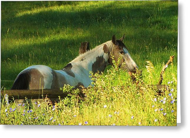 Meet Me At The Fence Greeting Card by Feva  Fotos