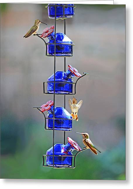 Ventura California Greeting Cards - Meet-up at the Feeder Greeting Card by Lynn Bauer