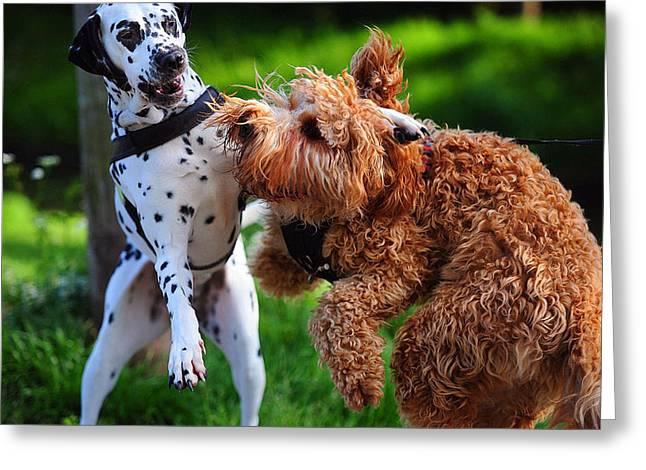 Meet Up With Friend.  Kokkie. Dalmation Dog Greeting Card by Jenny Rainbow