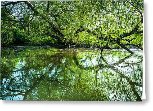 Recently Sold -  - Willow Lake Greeting Cards - Meeting a Willow Tree in the evening Greeting Card by Ellie Teramoto