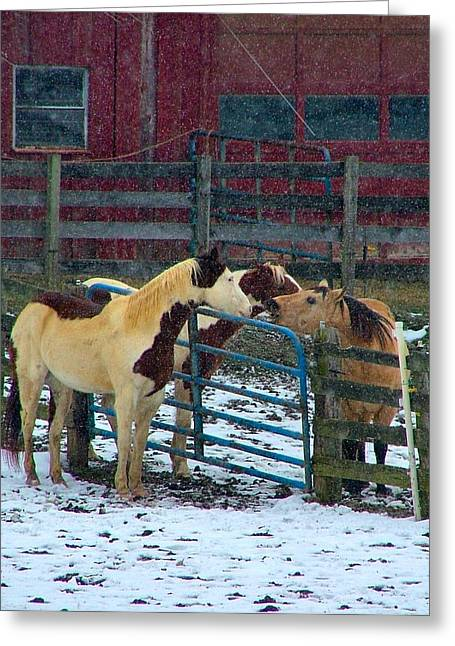Julie Dant Photographs Greeting Cards - Meeting of The Equine Minds Greeting Card by Julie Dant