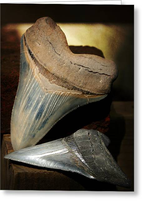 Shark Fossil Greeting Cards - Megalodon Fossil Shark Teeth Greeting Card by Rebecca Sherman