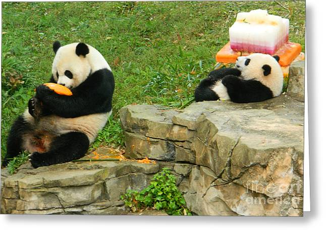 Wildlife Celebration Greeting Cards - Mei Xiang and Bao Bao In Celebration Greeting Card by Emmy Marie Vickers