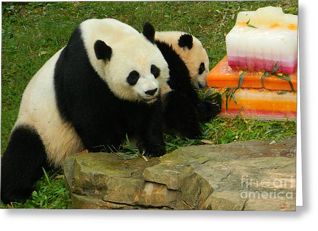 Wildlife Celebration Greeting Cards - Mei Xiang and Bao Bao the Pandas Greeting Card by Emmy Marie Vickers