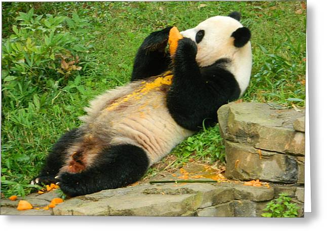 Wildlife Celebration Greeting Cards - Mei Xiang Chowing On Frozen Treat Greeting Card by Emmy Marie Vickers