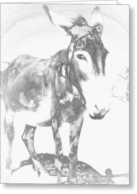Farmlife Greeting Cards - Melancholic Jackass Greeting Card by Hilde Widerberg