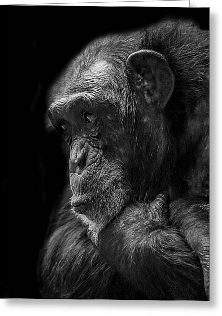 Chimpanzee Greeting Cards - Melancholy Greeting Card by Paul Neville