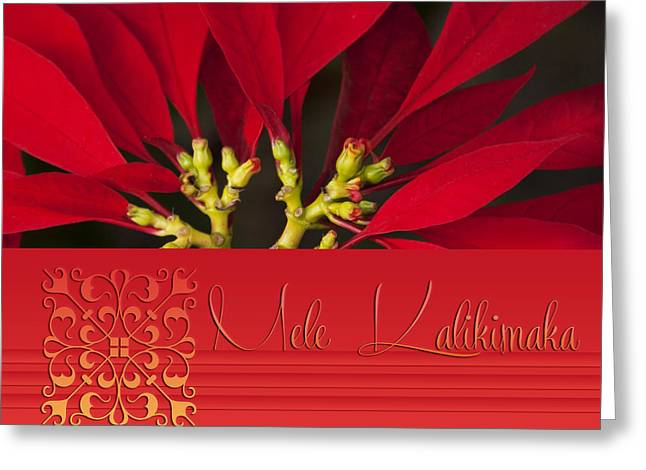 Euphorbiaceae Greeting Cards - Mele Kalikimaka Greeting Card by Sharon Mau