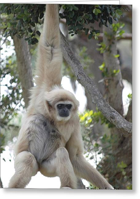 Ape Digital Greeting Cards - Mell Gibbons Greeting Card by Barbara Snyder