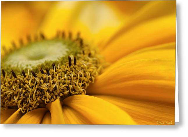 Florescence Greeting Cards - Mellow Yellow Greeting Card by Heidi Smith